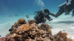 diving-285539
