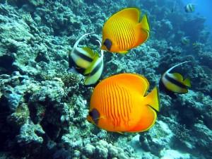 diving-754993