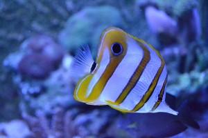 fish-676569