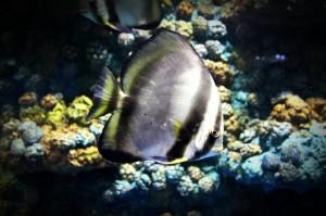 fish-931572