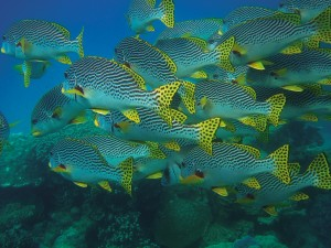 fish-swarm-432821