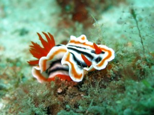 nudibranch-1537993