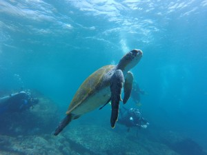 sea-turtle-1296565