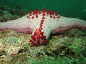 starfish-1179255
