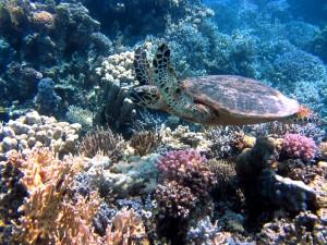 turtle-185484