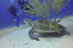 turtle-588497