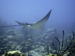 underwater-101368