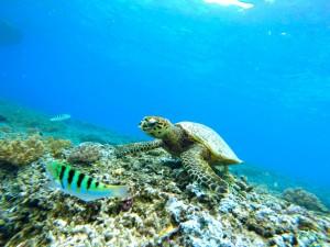 underwater-663407