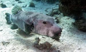 underwater-721983